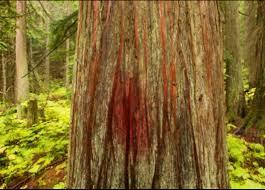 Tola'ath (A Crimson Worm) – Biblical Word Studies